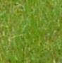 Avatarbild von stellasirius