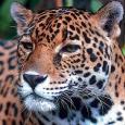 Avatarbild von JaguarCat