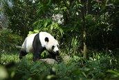 Avatarbild von Der liebe Regenwaldpanda